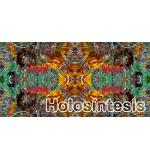 banda HoloSex